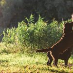 Parque para perros en madrid
