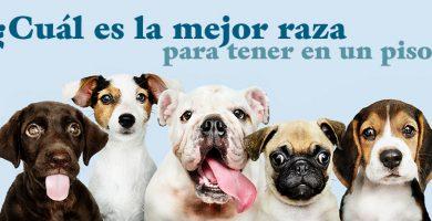 Mejores perros para piso