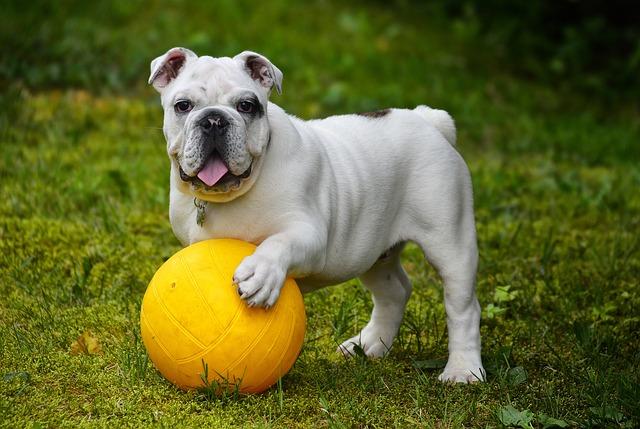 perrito con pelota