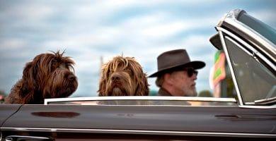 como llevar al perro en el coche