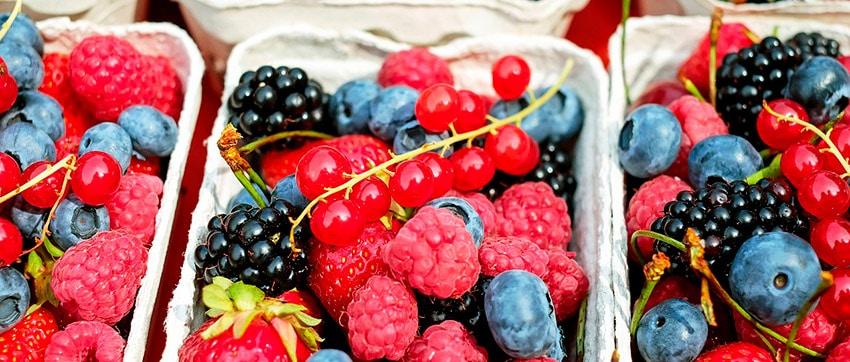 frutas para perros