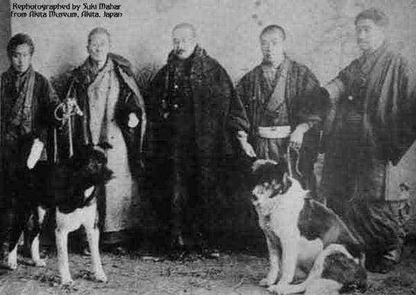 las 7 razas de perro asociadas a los aristócratas