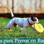 parque para perros barcelona