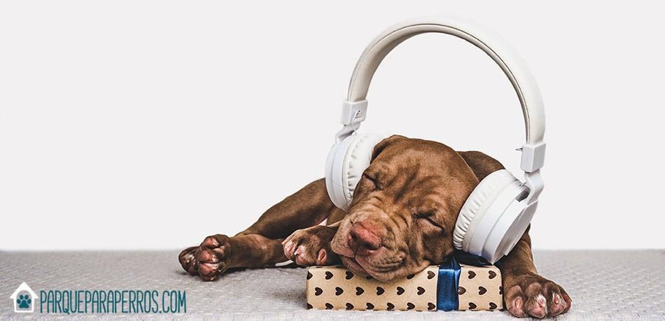 perro escuchando música relajante