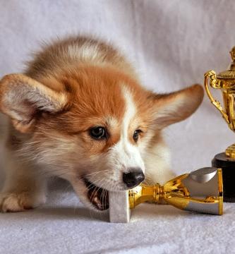 como detener la mordedura de un perro