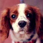 cómo enseñar a mi perro a quedarse quieto