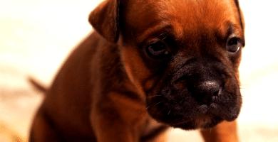 cómo evitar que mi perro llore