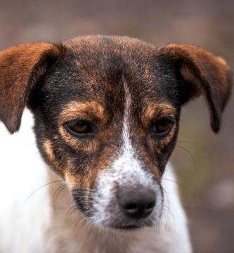 cómo evitar que mi perro tenga miedo de los hombres