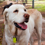 cómo tratar el mal aliento en los perros