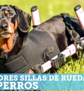 Mejores sillas de ruedas para perros