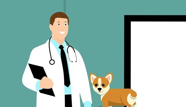 veterinario de confianza